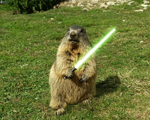 Jedi groundhog defense against the Darkside... or his shadow
