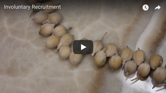 First Stop motion short – Involuntary Recruitment